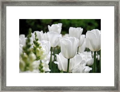Garden Beauty Framed Print by Jennifer Ancker