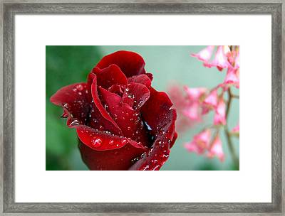 Garden Bouquet Framed Print by Steven Milner