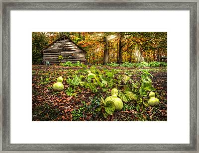Garden Gourds Framed Print by Debra and Dave Vanderlaan