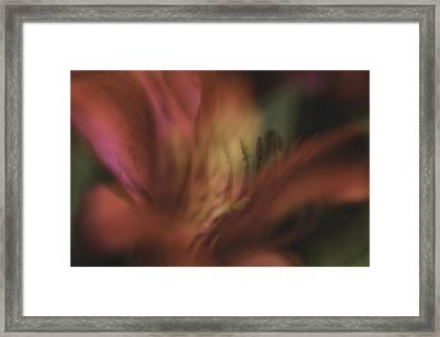 Garden Impression 44 Framed Print by Charles Garrett