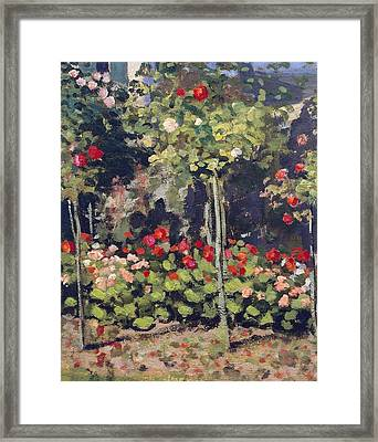 Garden In Bloom Framed Print by Claude Monet