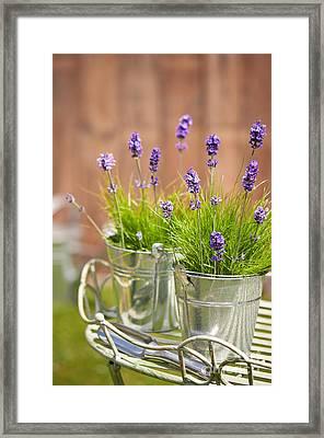 Garden Lavender Framed Print by Amanda And Christopher Elwell