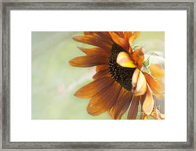 Garden Whispers Framed Print by Sharon Mau