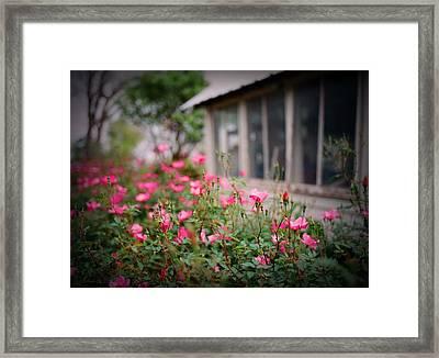 Gardens Of Pink Framed Print by Linda Unger