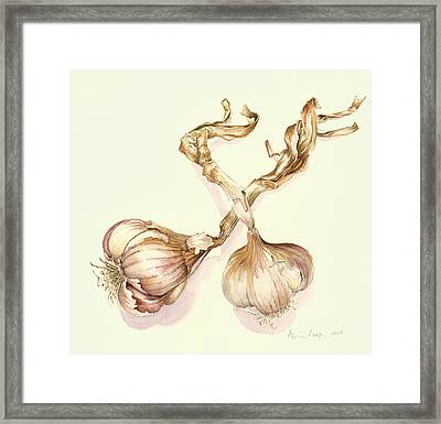 Garlic Bulbs Framed Print by Alison Cooper
