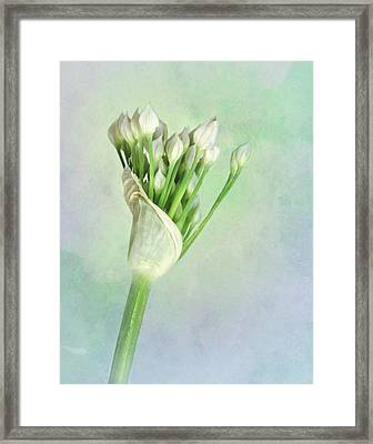 Garlic Chive Framed Print by David and Carol Kelly
