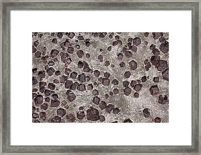 Garnet In Micaschist I Framed Print by Dirk Wiersma