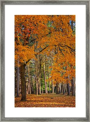 Gateway To The Forest Framed Print by Bill Wakeley