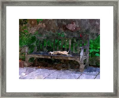 Gato Dorme Framed Print by Duende Artworks