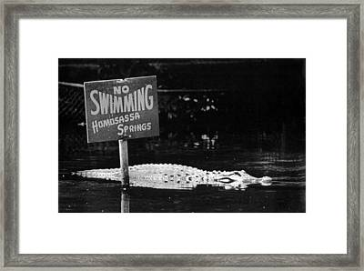 Gator At Homossa Springs Framed Print by Retro Images Archive