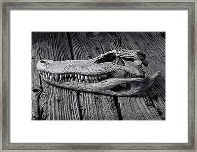 Gator Black And White Framed Print by Garry Gay