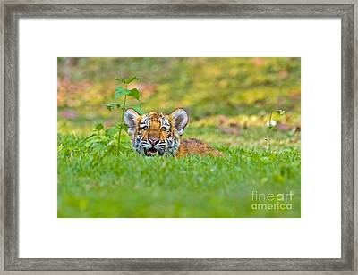 Gauging The Distance Framed Print by Ashley Vincent