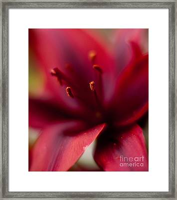 Gazer Red Angles Framed Print by Mike Reid