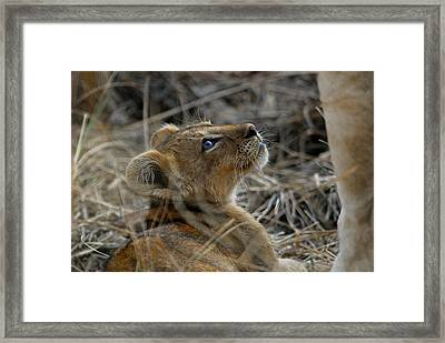 Gazing Framed Print by Stefan Carpenter