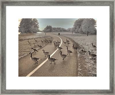 Geese Crossing Framed Print by Jane Linders
