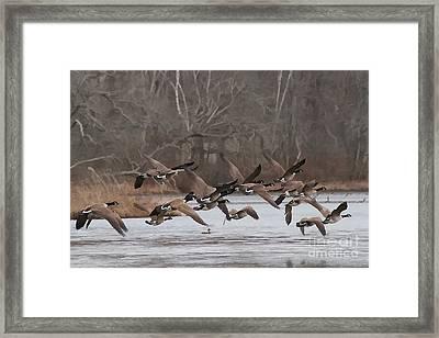 Geese In Flight Framed Print by Heidi Piccerelli