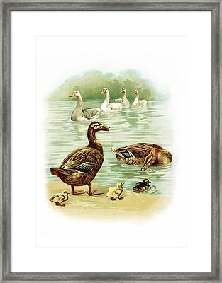 Geese Framed Print by Munir Alawi