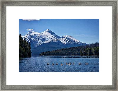 Geese On Maligne Lake - Jasper Framed Print by Stuart Litoff