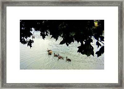 Geese On The Lake Framed Print by Paula Tohline Calhoun
