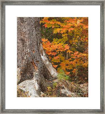Generations Framed Print by Charles Kozierok