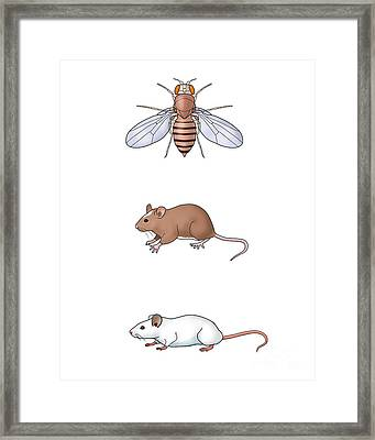 Genetic Icons, Illustration Framed Print by Carlyn Iverson