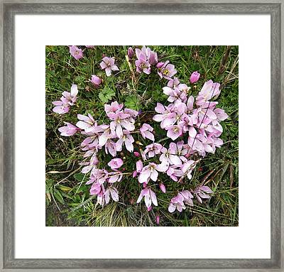Gentian Flowers Of The Paramo Framed Print by Kurt Van Wagner