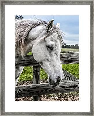 Gentle Beauty Framed Print by CarolLMiller Photography