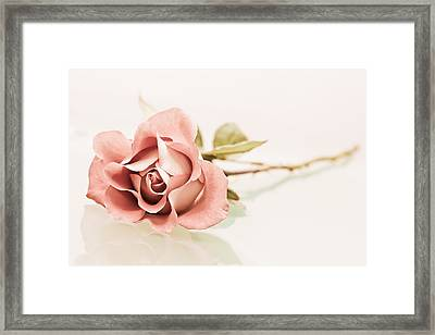 Gentle Framed Print by Elvira Pinkhas