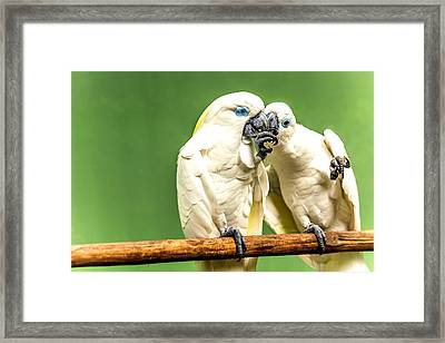 Gentle Love Framed Print by Jijo George