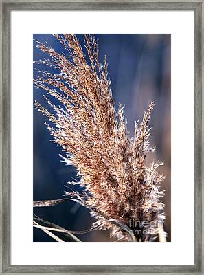 Gentle Nature Framed Print by John Rizzuto