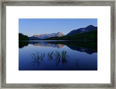 Gentle Spring Framed Print by Chad Dutson