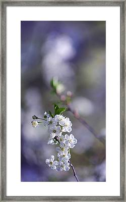 Gentle Touch Of Spring Framed Print by Jenny Rainbow