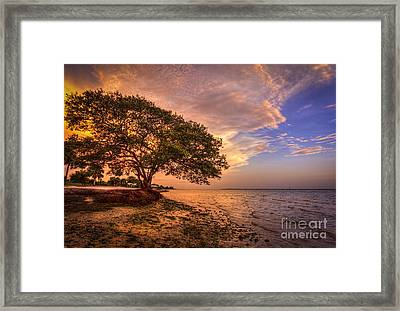 Gentle Whisper Framed Print by Marvin Spates