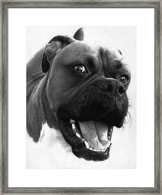 George - Boxer Dog Framed Print by Justin Clark