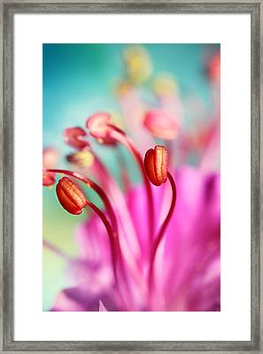 Geranium Candy Framed Print by Sharon Johnstone