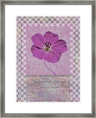 Geranium Purple Poster 3 Framed Print by Barbara St Jean