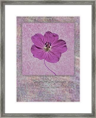 Geranium Purple Poster 4 Framed Print by Barbara St Jean