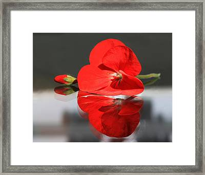 Geranium Reflections 2 Framed Print by  Andrea Lazar