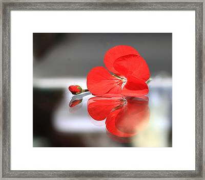 Geranium Reflections Framed Print by  Andrea Lazar