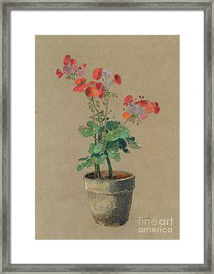 Geraniums In A Pot  Framed Print by Odilon Redon