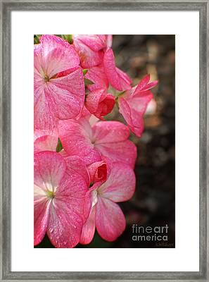 Geraniums Kissed With Dew Drops Framed Print by Ella Kaye Dickey