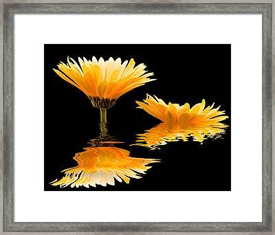 Gerbera Reflection Framed Print by Jean Noren