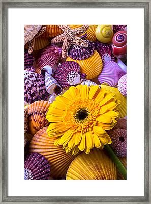 Gerbera With Seashells Framed Print by Garry Gay