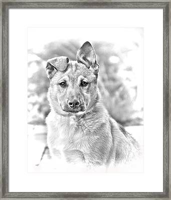 German Shepard Puppy Framed Print by James BO  Insogna