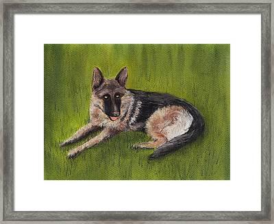 German Shepherd Framed Print by Anastasiya Malakhova