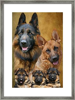 German Shepherd Family Collage Framed Print by Sandy Keeton