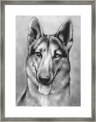 German Shepherd Framed Print by Greg Joens
