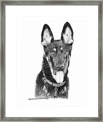 German Shepherd Kimo Framed Print by Jack Pumphrey
