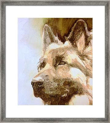 German Shepherd Maverick  Framed Print by Lovereen Moore