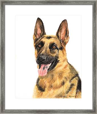 German Shepherd Painting Portrait  Framed Print by Kate Sumners